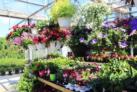 Lake Ridge Nursery, Inc. - Garden Center