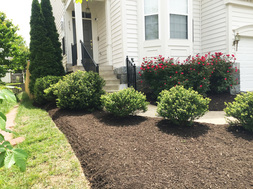 Lake Ridge Nursery, Inc. - Landscaping Services